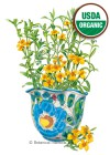 Tarragon Mexican Organic HEIRLOOM Seeds