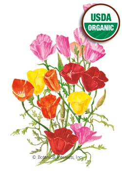 Poppy California Spring Melody Blend Organic Seeds