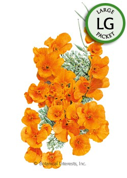 Poppy California Orange Seeds (LG)