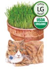 Cat Grass Mix Organic Seeds (LG)